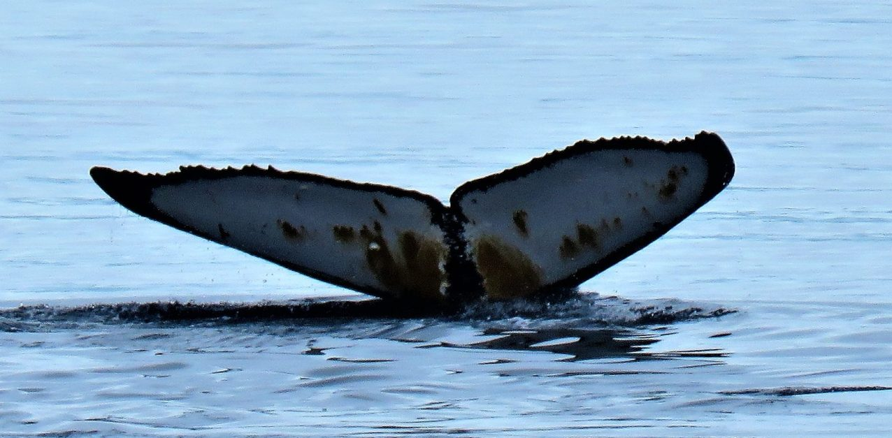 cropped-whales-tail.jpg