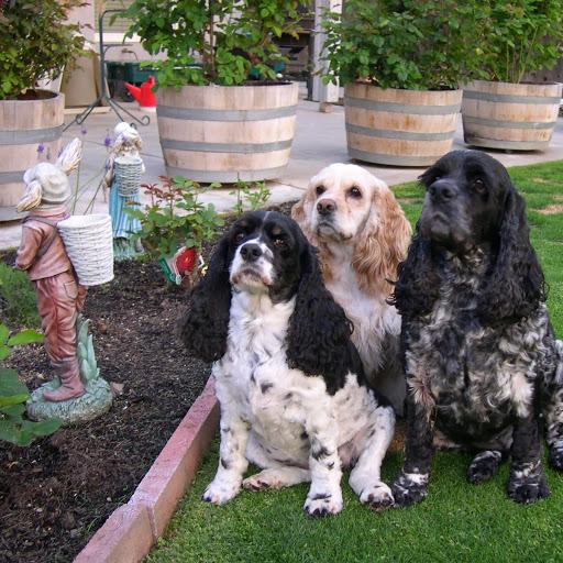 Mohawk, LadyBug and Zelda- Bakersfield