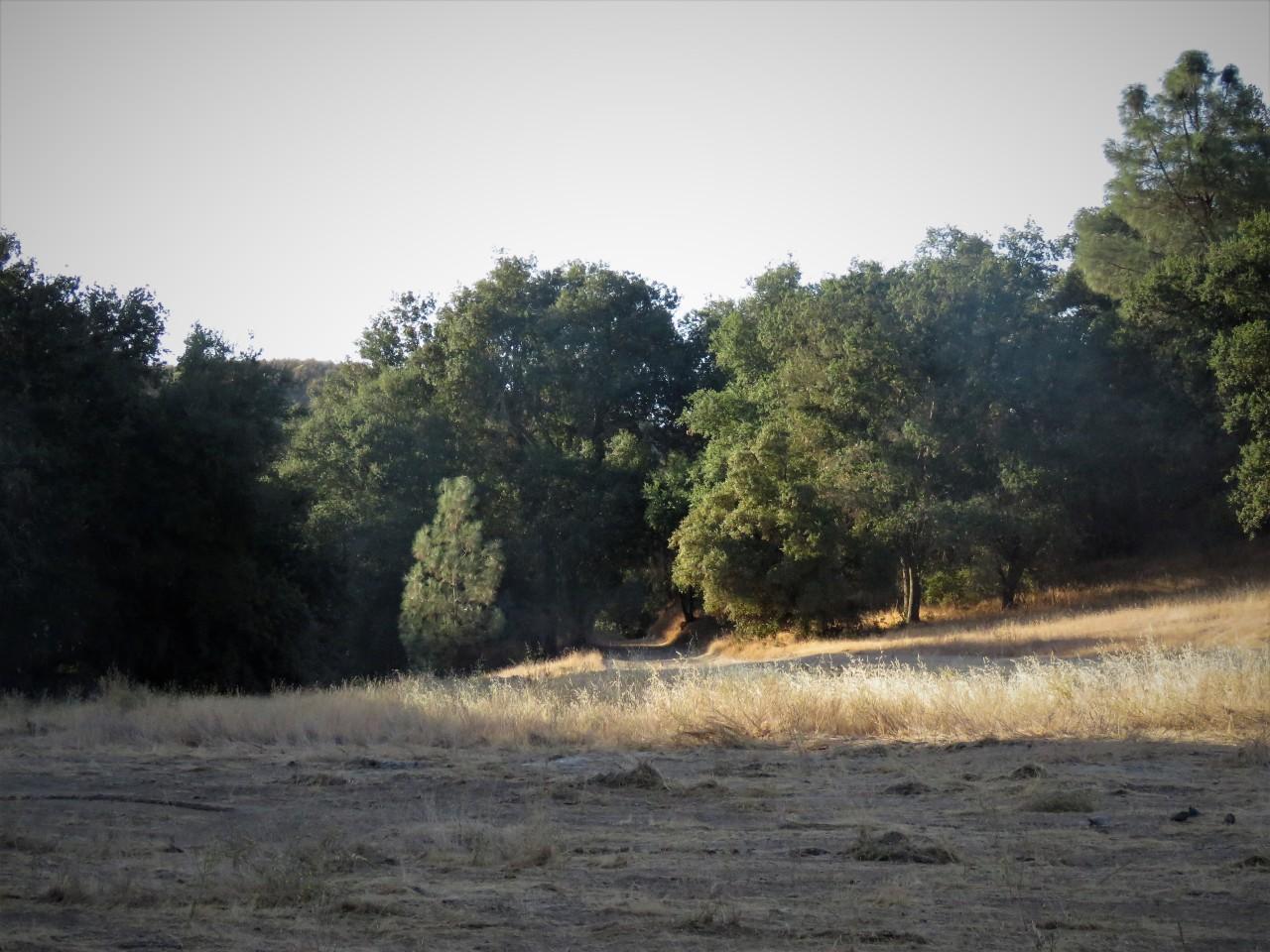 Field in sun