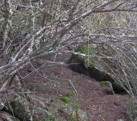 maze trail 1