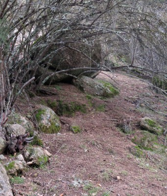 maze trail 2