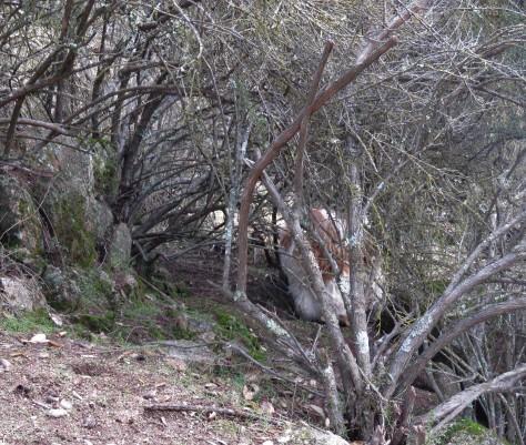 maze trail 3