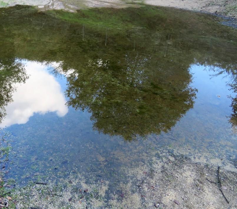 Mueller Lake reflections 4