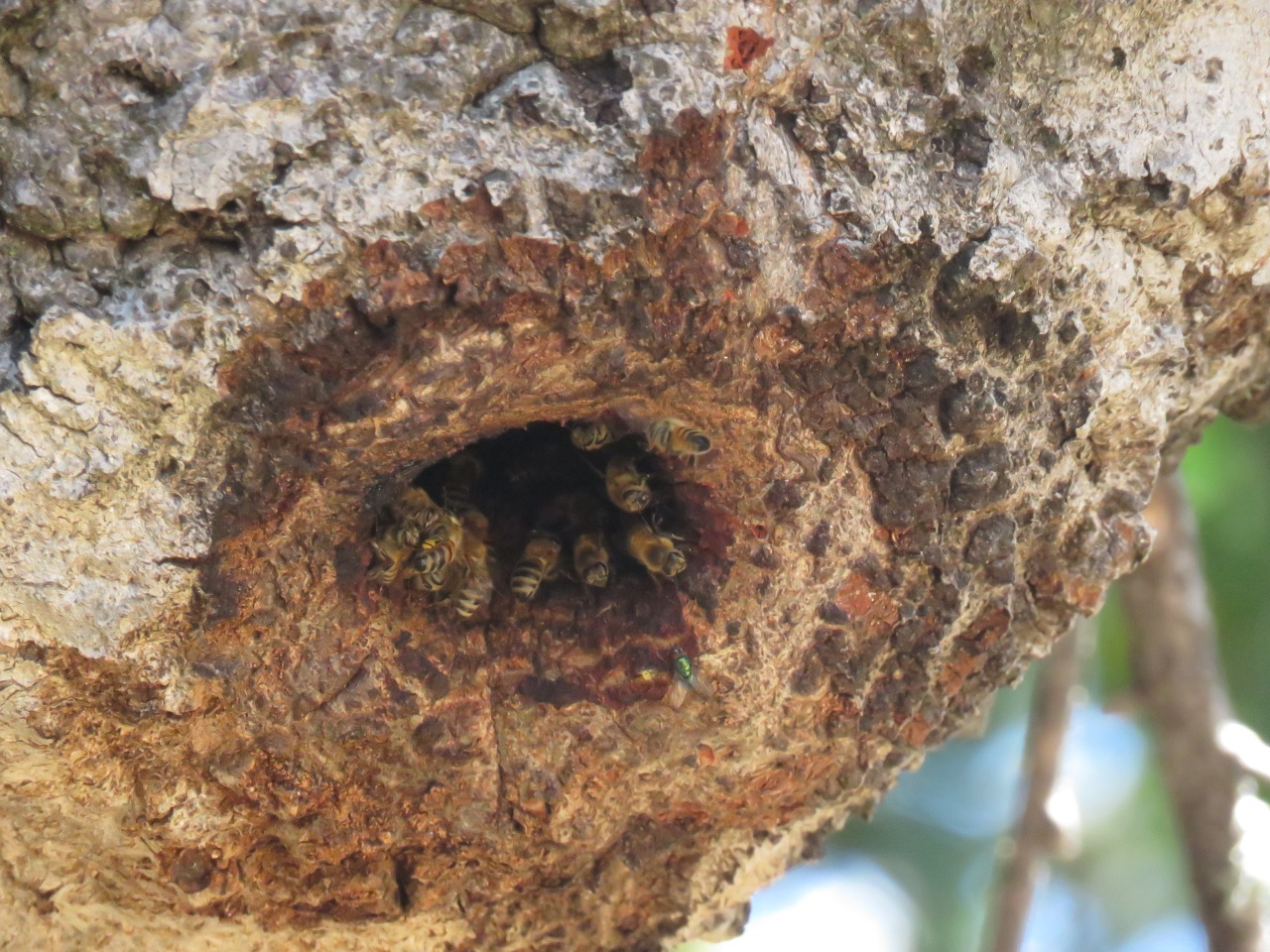 Geez, Bees!